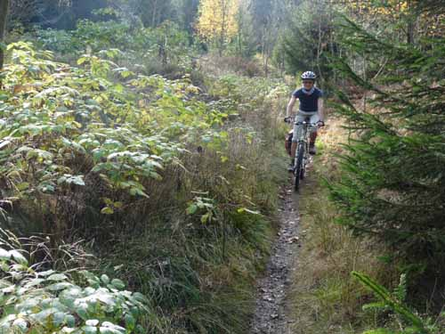 MTB im Nationalpark Harz | TRAILTECH. MOUNTAINBIKING. HARZ.