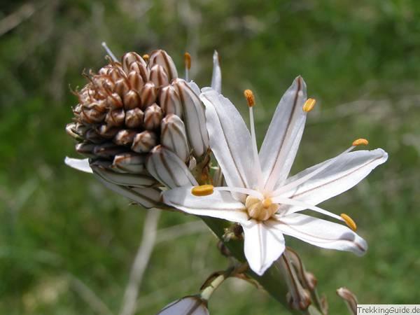 Pflanzen am Mittelmeer und auf den Kanaren