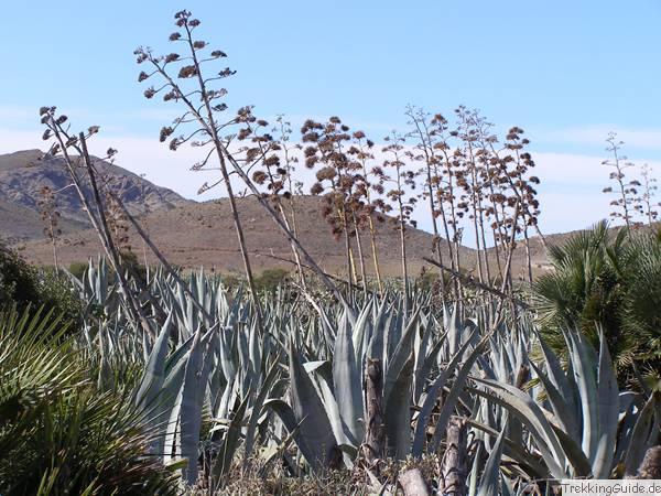 Pflanzen Mittelmeer